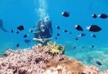 Du lịch Phú Quốc - Lặn ngắm san hô tại công viên san hô